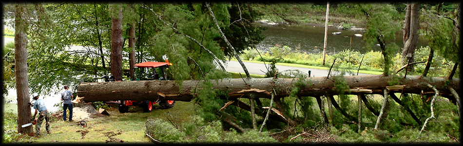 Removing damaged or dangerous trees in Clarion County Pennsylvania